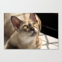 Study of a Cat Canvas Print