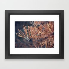 Pine Needle Framed Art Print