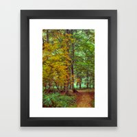 A Walk In The Woods Framed Art Print