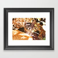 Cat In The Shadows Framed Art Print