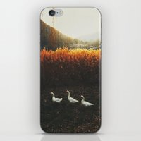 Walking geese iPhone & iPod Skin