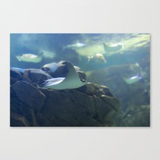 In the Tank: Flight Canvas Print