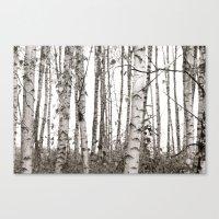 Birchwood Canvas Print
