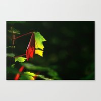 Play Of Light Canvas Print
