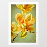 Sunny Magnolias Art Print