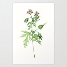Flowers For Dad Art Print