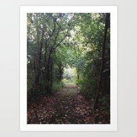 Natures Path Art Print
