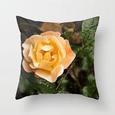 Rose 1 Throw Pillow