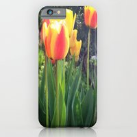 iPhone & iPod Case featuring Spring Tulips in Bloom by Allison corn
