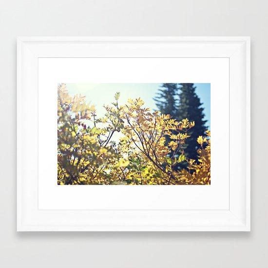 Fall Sun Framed Art Print