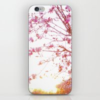 Sun-Drenched iPhone & iPod Skin