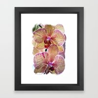 Stripped Orchids Framed Art Print