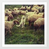 Herding dog, male, south of Israel, scaned sx-70 Polaroid Art Print