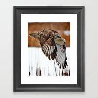 Rough-legged Hawk Framed Art Print