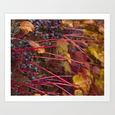 Berries and Leaves Art Print