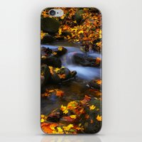 Autumn Flow iPhone & iPod Skin
