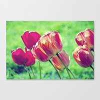 Lighted Tulips Canvas Print
