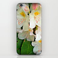 A Beauty All Her Own  iPhone & iPod Skin
