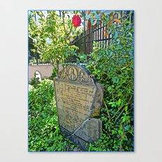 Long Ago and a Rose Grows Canvas Print