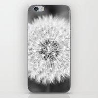 Black & White Dandelion iPhone & iPod Skin