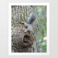 Squirrels Art Print