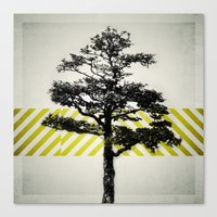 Canvas Print featuring Ulmus parvifolia (Defying the Odds) by Piccolo Takes All