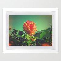 Spring Rose  Art Print