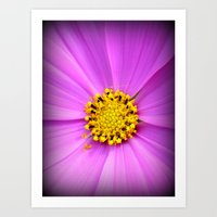 Purple flower and pollen close up. Art Print