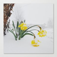 Spring Lost A Bet To Winter Canvas Print