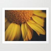 Sunflow Daze Art Print