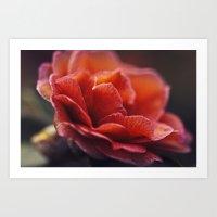 Fiery Petals Art Print