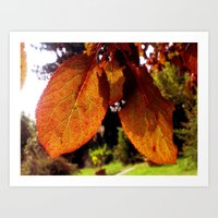 Autumn Leaves Art Print