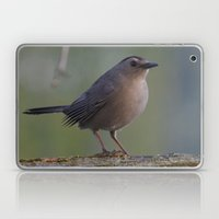 Gray Catbird Near Sunris… Laptop & iPad Skin