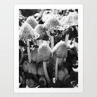 b&w mushrooms 2016 II Art Print