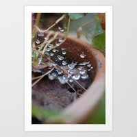 Water's Web Art Print