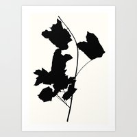 maple 1 Art Print