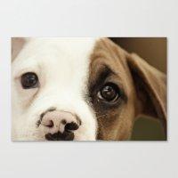 Boxer Nose Canvas Print