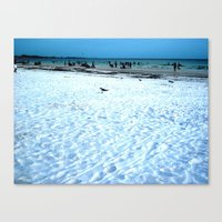 Lost Seagull Canvas Print