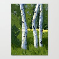 Aspens - Catching the Light Canvas Print