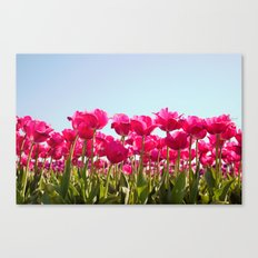 Tulips in Bloom! Canvas Print