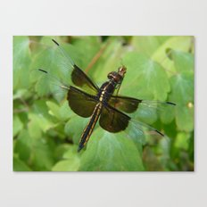 dragonfly II Canvas Print