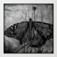Wings in the Garden Canvas Print