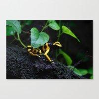 Poison Dart Frog D. Leucomelas Canvas Print