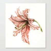 Pink Lily Flower Watercolor Canvas Print