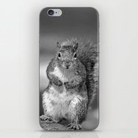 Squirrel iPhone & iPod Skin
