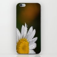 Raindrops and Daisy iPhone & iPod Skin
