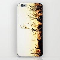 Maizal iPhone & iPod Skin