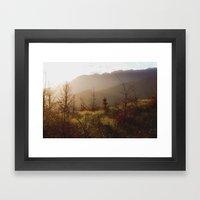 Wilding Pine Framed Art Print
