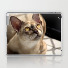 Study of a Cat Laptop & iPad Skin