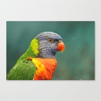 Rainbow Lorakeet  Canvas Print